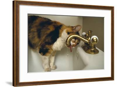 Calico Cat Drinking from Faucet-DLILLC-Framed Photographic Print
