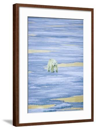 Polar Bear on Sea Ice-DLILLC-Framed Photographic Print