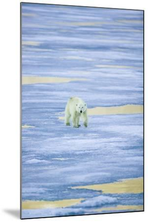 Polar Bear on Sea Ice-DLILLC-Mounted Photographic Print