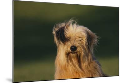 Mongrel Dog-DLILLC-Mounted Photographic Print