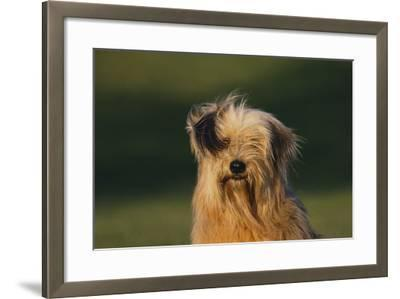 Mongrel Dog-DLILLC-Framed Photographic Print