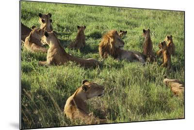Pride of Lions Lying in Grass-DLILLC-Mounted Photographic Print