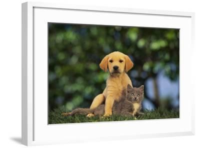 Puppy with Kitten-DLILLC-Framed Photographic Print