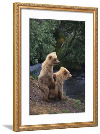 Brown Bear Cubs-DLILLC-Framed Photographic Print