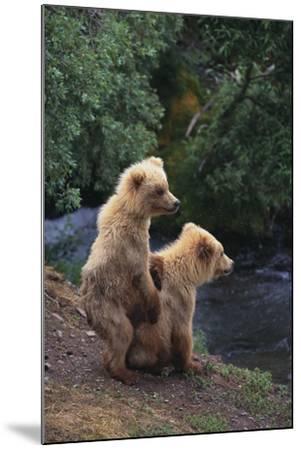 Brown Bear Cubs-DLILLC-Mounted Photographic Print