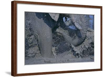 African Elephant Splashing in Watering Hole-DLILLC-Framed Photographic Print