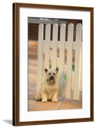 Cairn Terrier-DLILLC-Framed Photographic Print