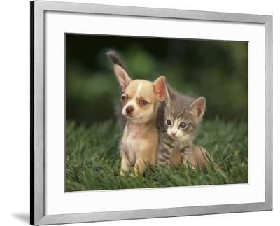 Chihuahua Puppy and Kitten-DLILLC-Framed Photographic Print