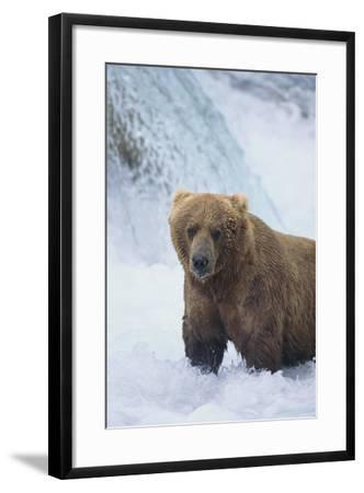 Brown Bear Standing in River-DLILLC-Framed Photographic Print