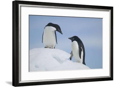 Pair of Adelie Penguins on an Iceberg-DLILLC-Framed Photographic Print