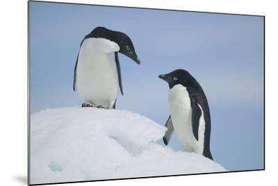 Pair of Adelie Penguins on an Iceberg-DLILLC-Mounted Photographic Print