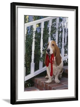 Waiting on the Front Porch for a Walk-DLILLC-Framed Photographic Print
