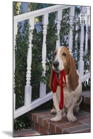 Waiting on the Front Porch for a Walk-DLILLC-Mounted Photographic Print