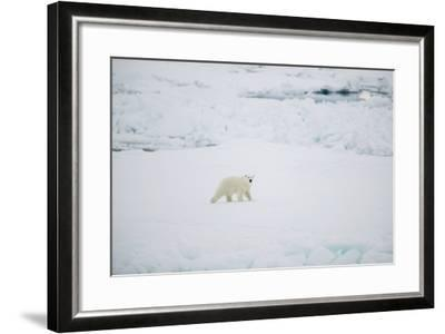 Polar Bear on Sea Ice-DLILLC-Framed Photographic Print
