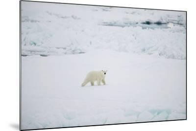 Polar Bear on Sea Ice-DLILLC-Mounted Photographic Print