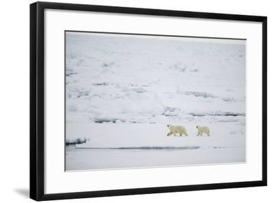 Pair of Polar Bears on Sea Ice-DLILLC-Framed Photographic Print