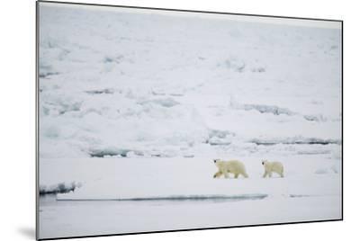 Pair of Polar Bears on Sea Ice-DLILLC-Mounted Photographic Print