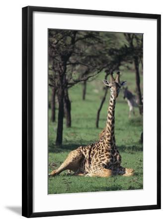 Giraffe Resting in the Grass-DLILLC-Framed Photographic Print