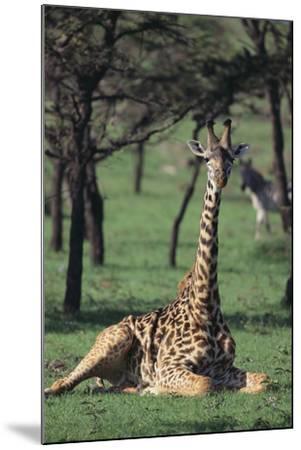 Giraffe Resting in the Grass-DLILLC-Mounted Photographic Print