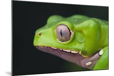 Monkey Tree Frog-DLILLC-Mounted Photographic Print