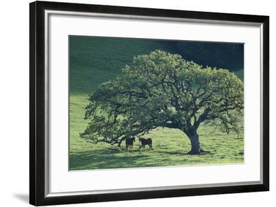 Horses in a Pasture-DLILLC-Framed Photographic Print