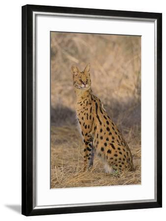 African Serval-DLILLC-Framed Photographic Print