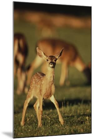 Baby Mule Deer-DLILLC-Mounted Photographic Print
