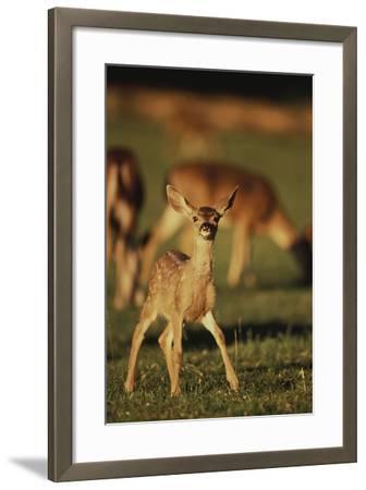 Baby Mule Deer-DLILLC-Framed Photographic Print
