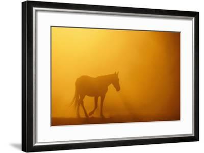 Wild Horse-DLILLC-Framed Photographic Print