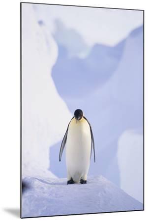 Emperor Penguin-DLILLC-Mounted Photographic Print