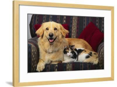 Dog and Cat Sitting in a Chair-DLILLC-Framed Photographic Print