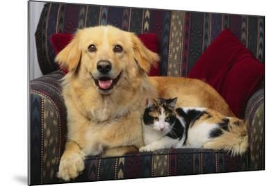Dog and Cat Sitting in a Chair-DLILLC-Mounted Photographic Print