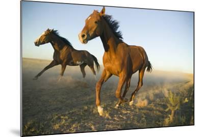 Quarter Horses Running in Field-DLILLC-Mounted Photographic Print