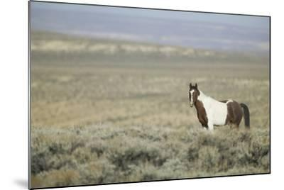 Wild Horse-DLILLC-Mounted Photographic Print