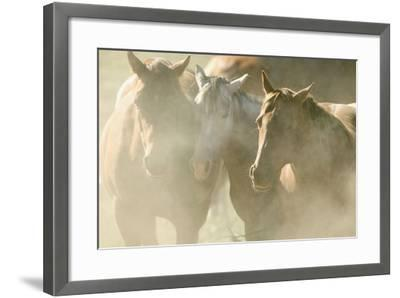 Quarter Horses-DLILLC-Framed Photographic Print