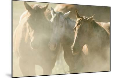 Quarter Horses-DLILLC-Mounted Photographic Print