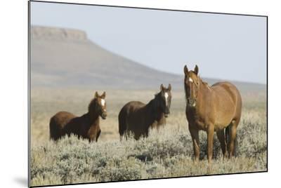 Wild Horses on Prairie-DLILLC-Mounted Photographic Print