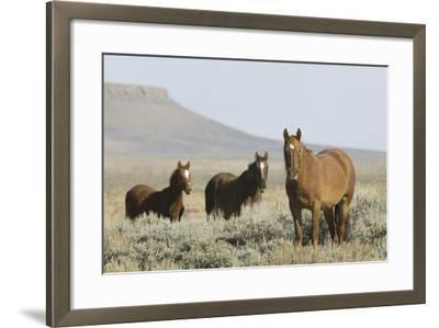 Wild Horses on Prairie-DLILLC-Framed Photographic Print
