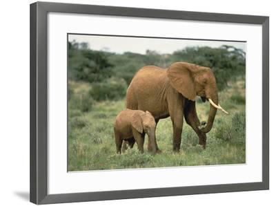 African Elephant with Calf-DLILLC-Framed Photographic Print