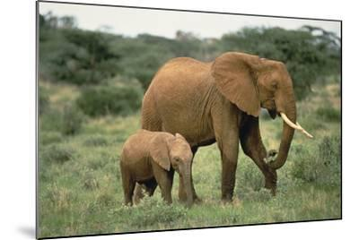 African Elephant with Calf-DLILLC-Mounted Photographic Print