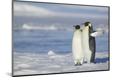 Pair of Emperor Penguins-DLILLC-Mounted Photographic Print