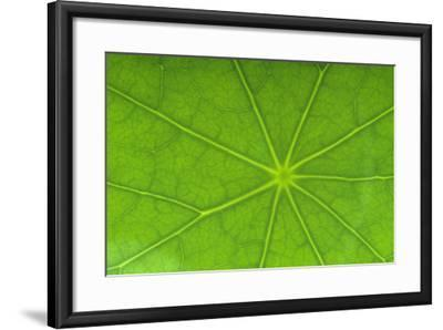 Close-Up of Nasturtium Leaf-DLILLC-Framed Photographic Print