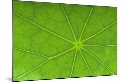 Close-Up of Nasturtium Leaf-DLILLC-Mounted Photographic Print