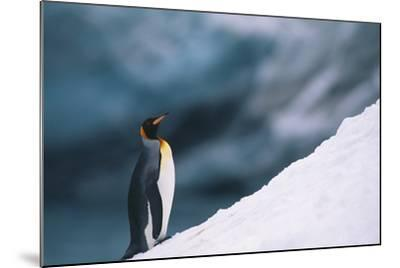 King Penguin on Snow-DLILLC-Mounted Photographic Print