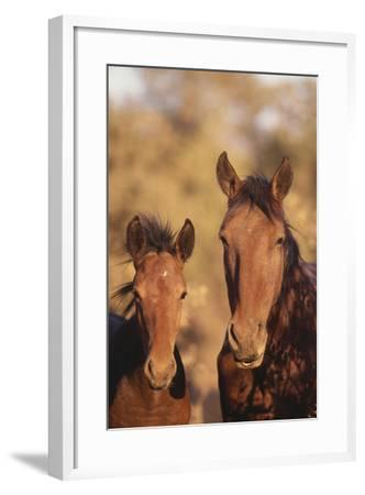 Wild Horse and Colt-DLILLC-Framed Photographic Print