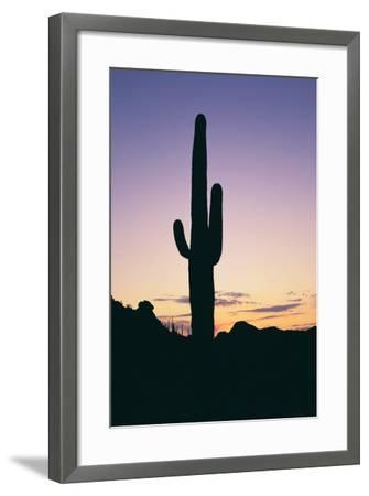 Saguaro Cactus-DLILLC-Framed Photographic Print