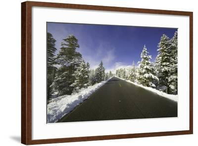 Mountain Highway among Snowy Trees in Inyo National Forest-Momatiuk - Eastcott-Framed Photographic Print