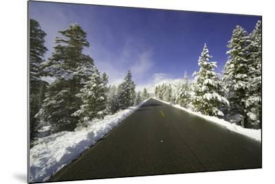 Mountain Highway among Snowy Trees in Inyo National Forest-Momatiuk - Eastcott-Mounted Photographic Print