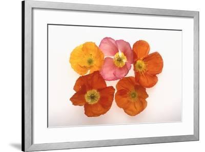 Poppy-DLILLC-Framed Photographic Print