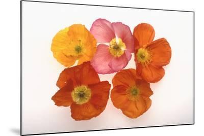 Poppy-DLILLC-Mounted Photographic Print